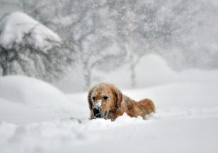 Жертвите на снежния ад в САЩ растат, очаква се дъжд в събота