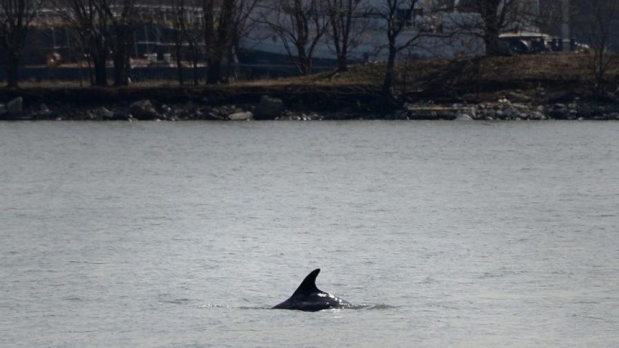 Учени откриха нов вид речен делфин в Бразилия