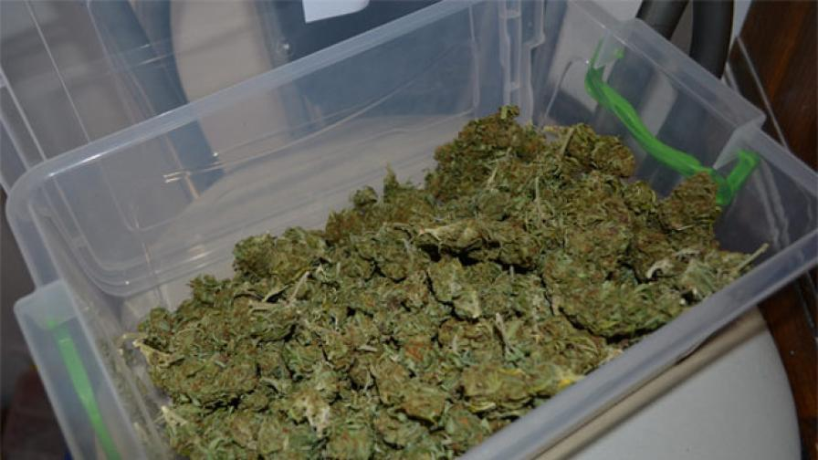 Албанската полиция задържа 750 кг марихуана