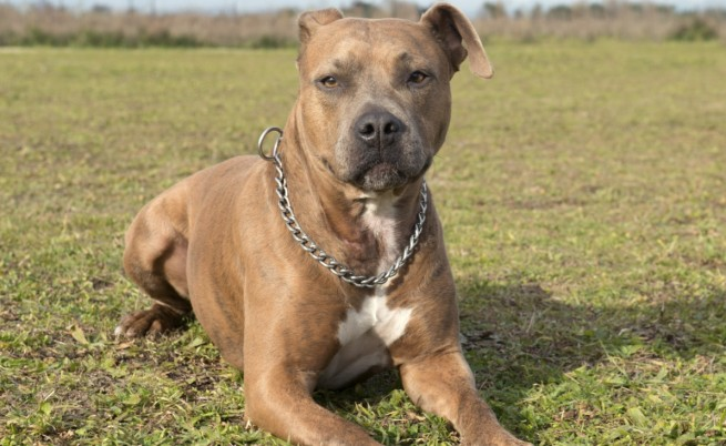 Проект: Кучета над 5 кг само на каишка