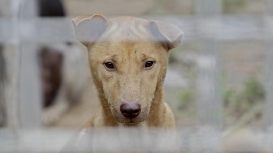 Съветите на МВР: Купете си куче пазач, сложете решетки