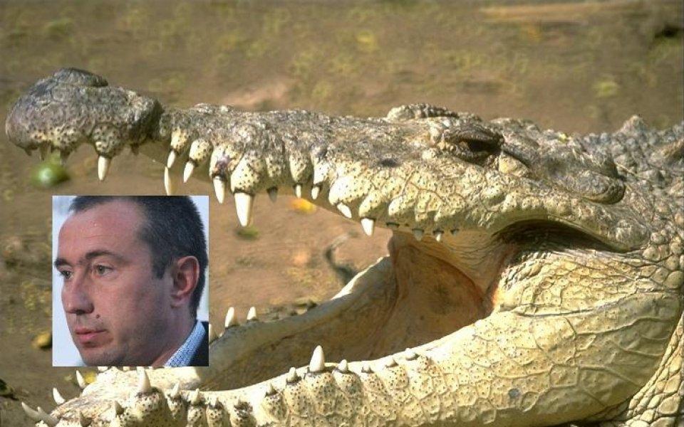 Станимир Стоилов: Никой не обича крокодила