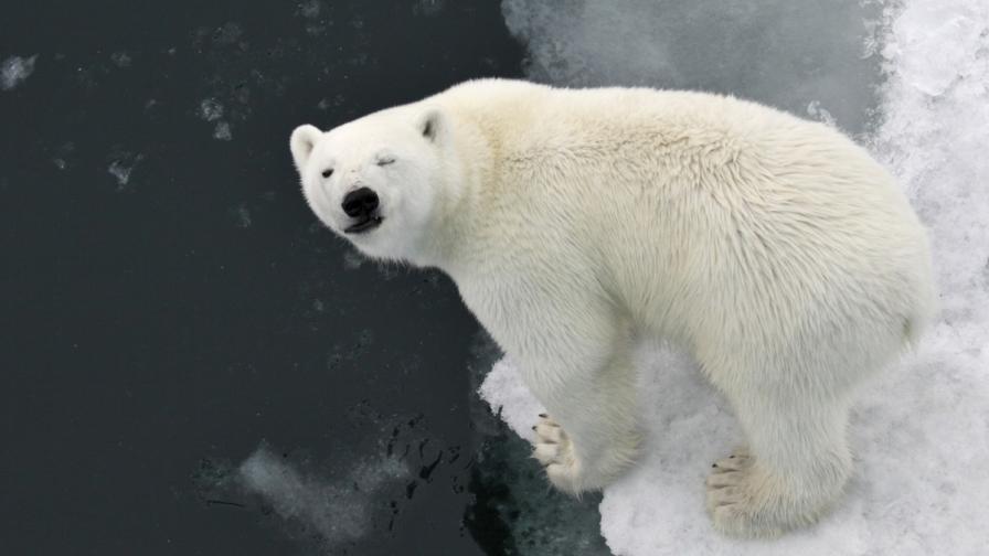 Полярният лед изчезва, резултатите са пагубни