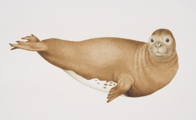 Средиземноморски тюлен монах
