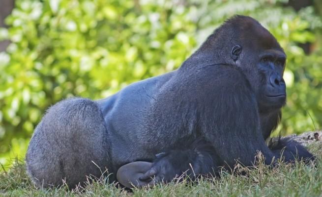Най-застрашените животински видове в Африка