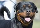 Кучета убийци на метри от Борисовата градина