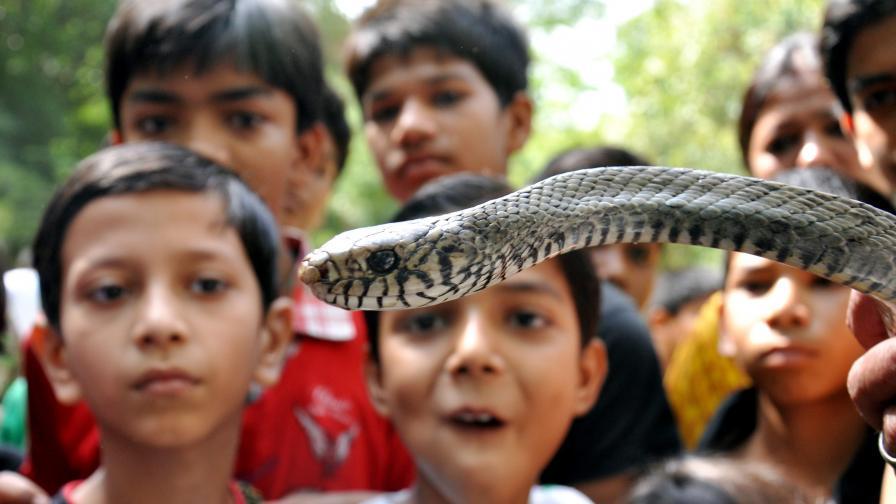 Стотици змии изпълзяха от подпорна стена в смолянско село
