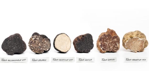 Различните видове трюфели