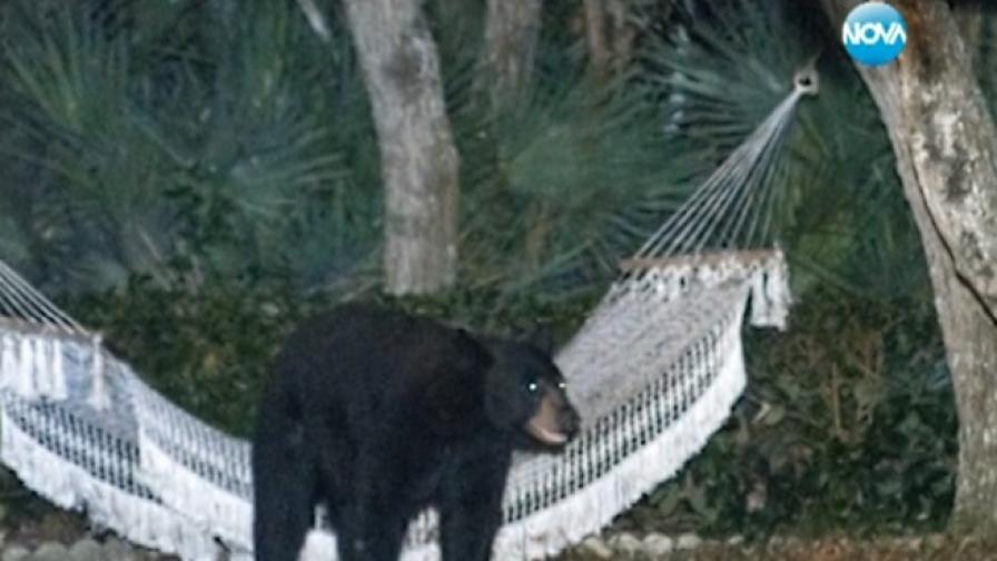 Мечка си почина в хамак в двор във Флорида