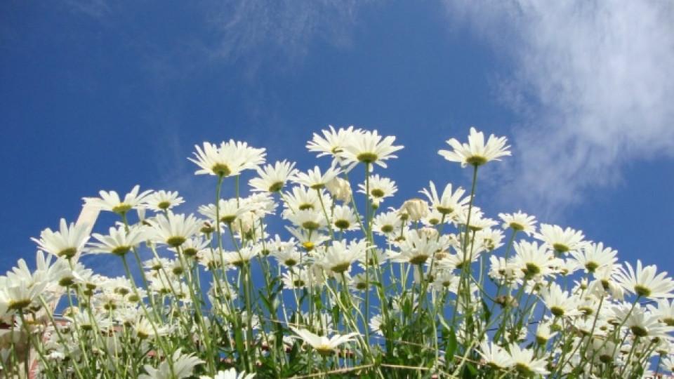 Днес е денят на лечебните билки