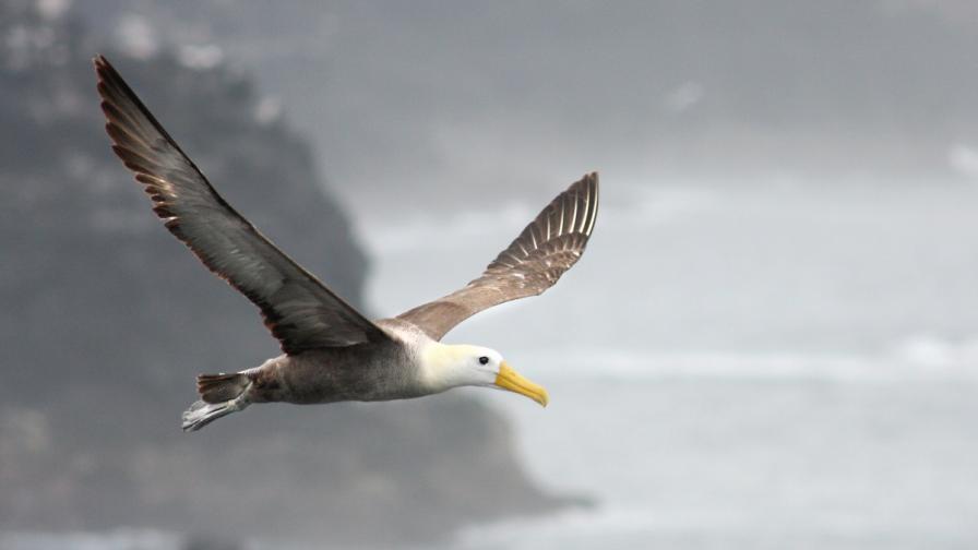 Откриха най-голямата птица, живяла на земята