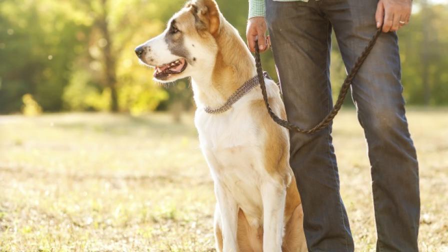 Най-атрактивни за британките са мъжете с кучета