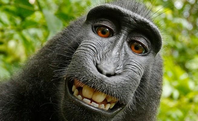 Маймунско