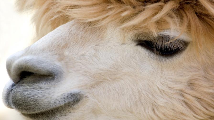 Затвориха столичния зоопарк заради загинали животни