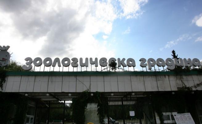 """""""24 часа"""": Бизоните в зоопарка са отровени"""