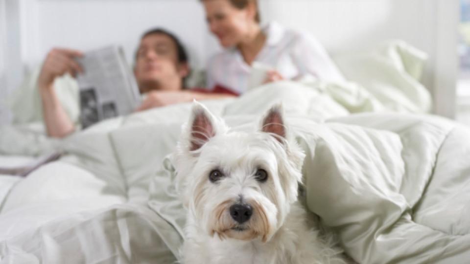 Коя е една от основните причини за лош сън?