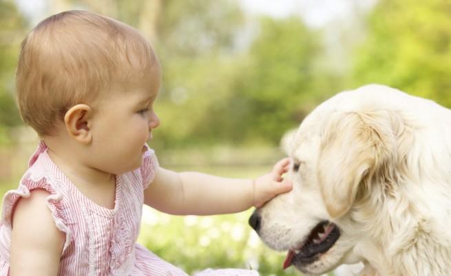 Кучетата имали интелект на 5-месечно бебе