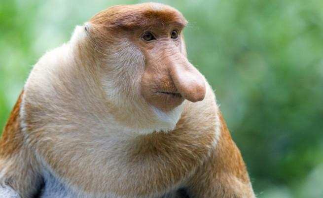 Най-абсурдните факти за животни на Земята