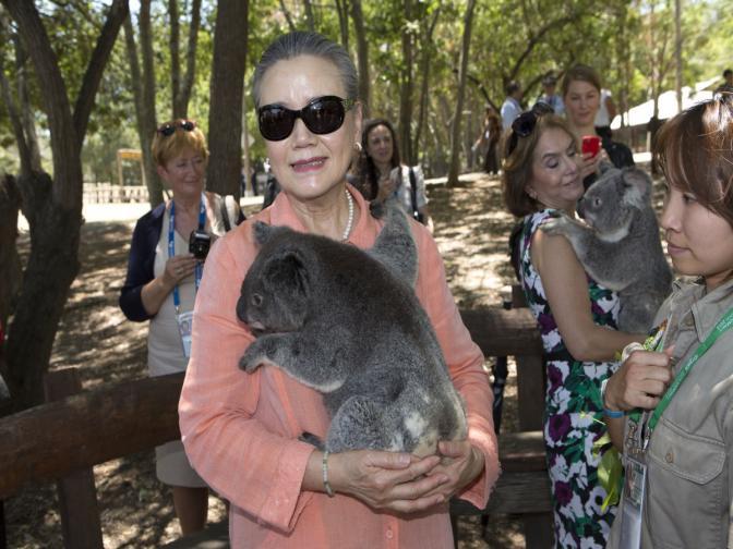 коали