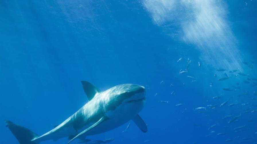 Тестват нова мрежа срещу акули на плаж на полуостров Кейп