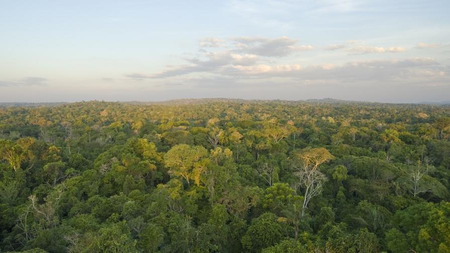 Обезлесяването в Амазония продължава с бързи темпове