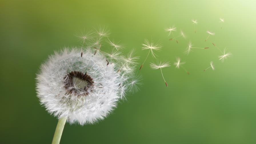 Любопитни факти за вятъра