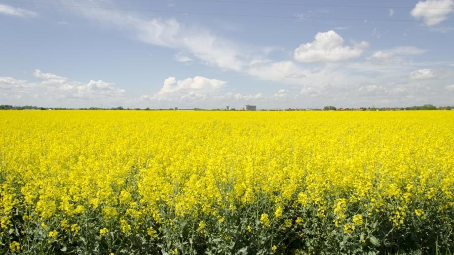 NYT: В България и ЕС олигарсите точат милиони от земеделие
