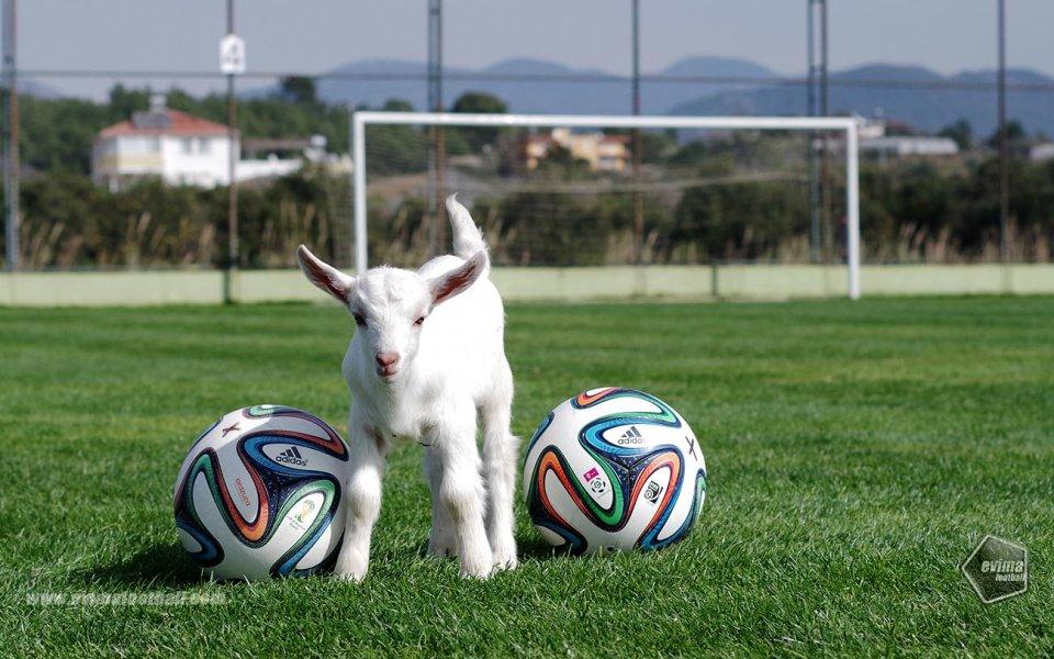 Нов талисман радва футболните отбори в Тюрклер