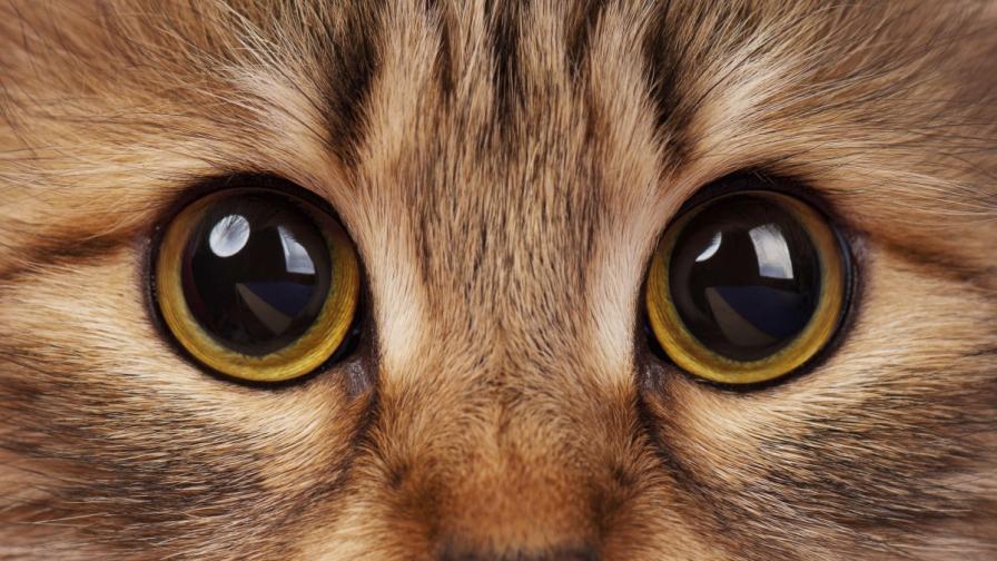 Почина най-старата котка в света