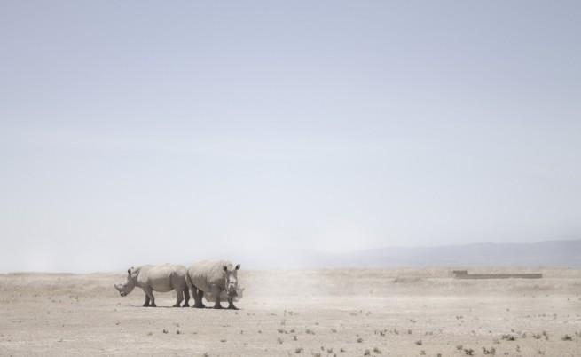 Замразен зоопарк – надеждата на застрашените видове