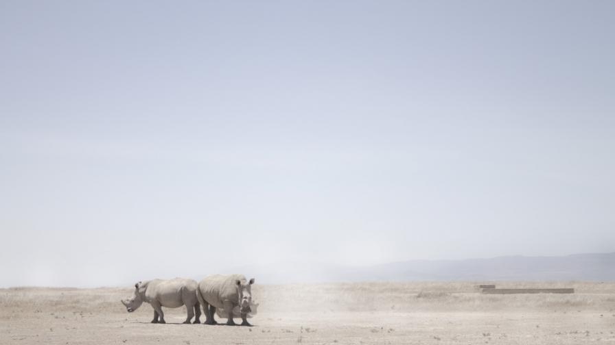 Северен бял носорог