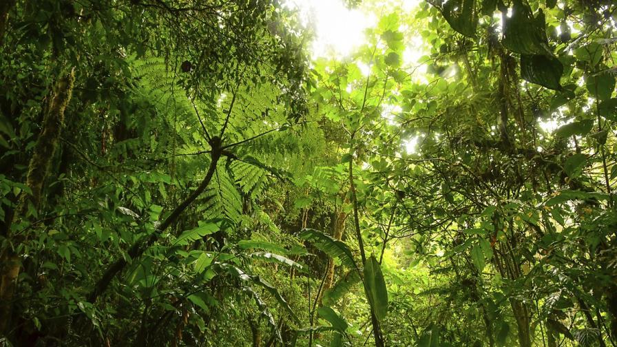 Хондураската джунгла