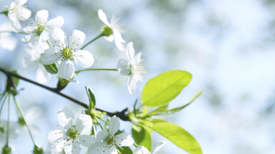 Честита първа пролет! Тя настъпи в 00:45 ч. на 21 март