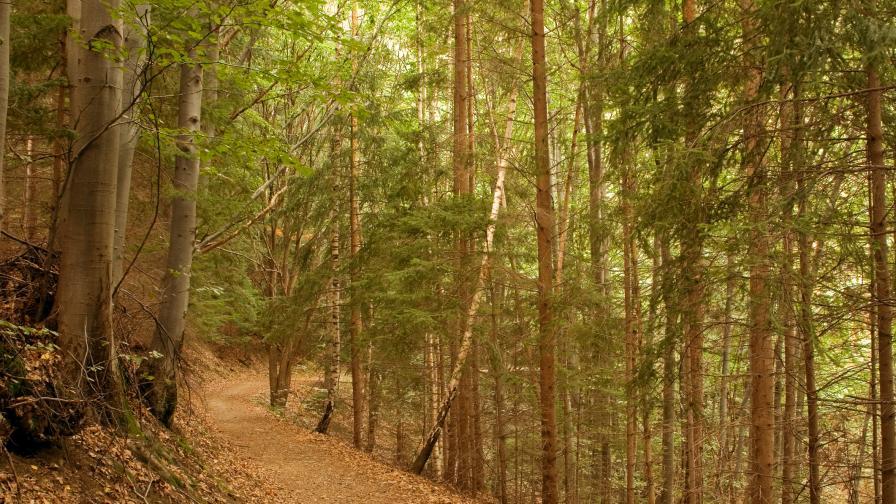 Възстановяват пътеки в резервати на Витоша