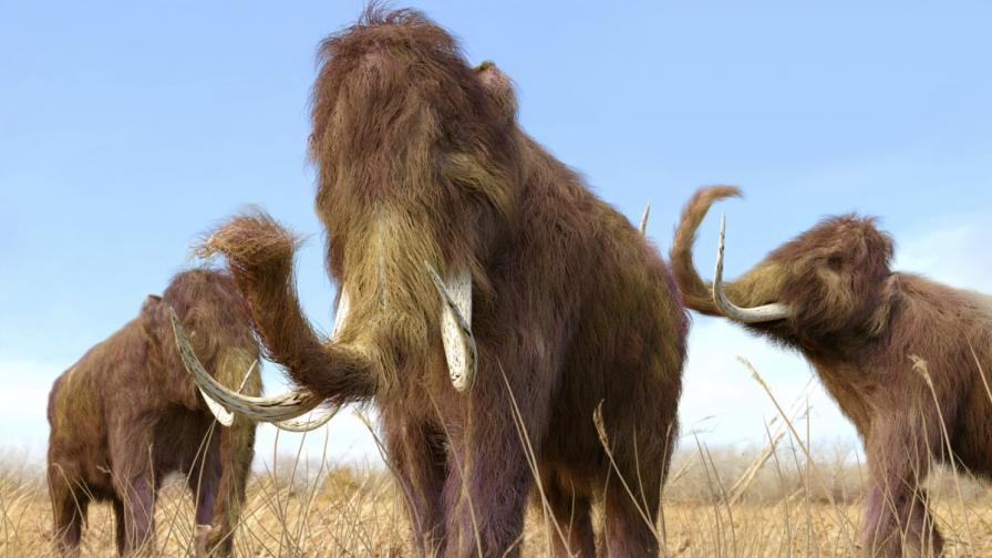 Компания иска да възроди мамутите до 2027 г.