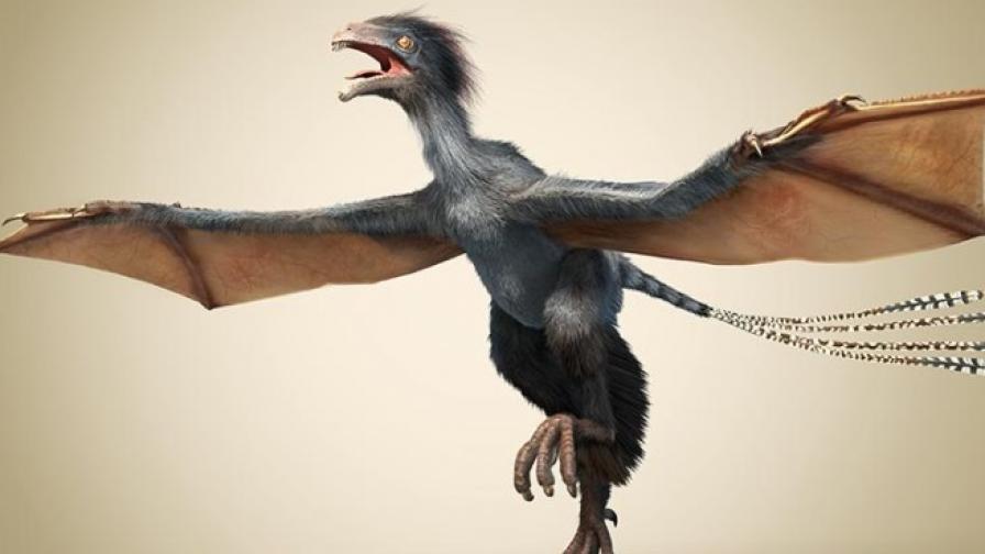 Малкият динозавър И ци има криле на прилеп
