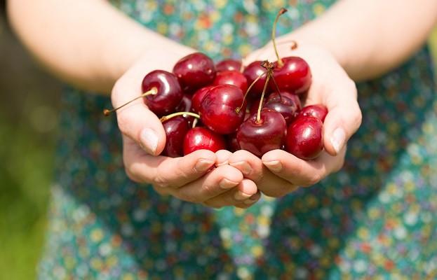 <p>Черешите помагат срещу подагра и артрит. Ако не знаете нищо за тези болести, яжте череши, за да си останете в неведение. Черешите съдържат антиоксиданти, които, освен за здравето, се грижат и за красотата ви. Закусвайте с тях сутрин, яжте ги вместо следобеден шоколад, изобщо &ndash; злоупотребявайте с тях както намерите на добре.</p>
