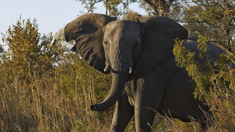 Слон атакува селище, рани две деца (видео)