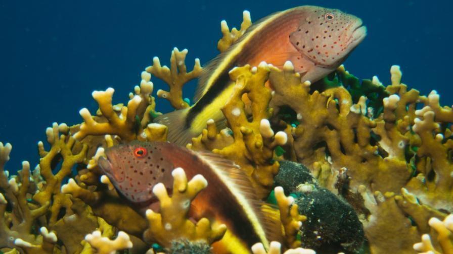 Шумът от корабните двигатели застрашава живота на рибите