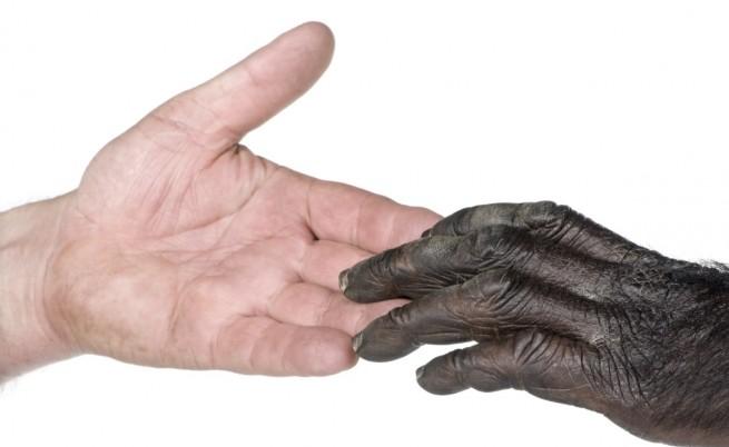 Човешката ръка е по-примитивна от тази на шимпанзетата