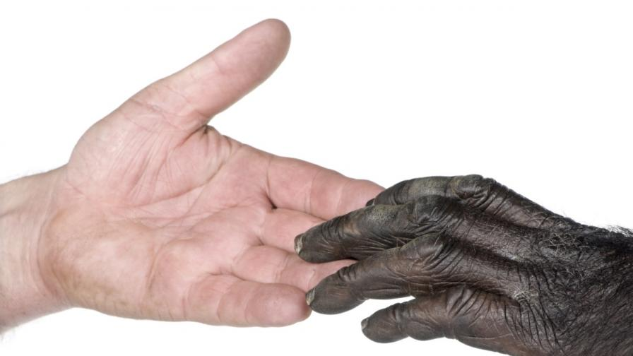 Ръката ни е по-примитивна от тази на шимпанзетата