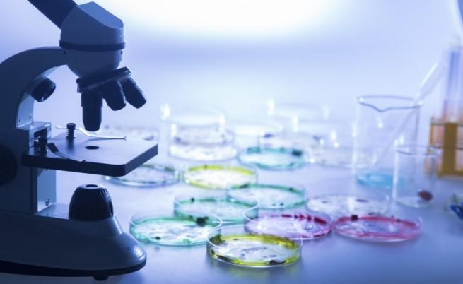 Учени създадоха полусинтетичен организъм
