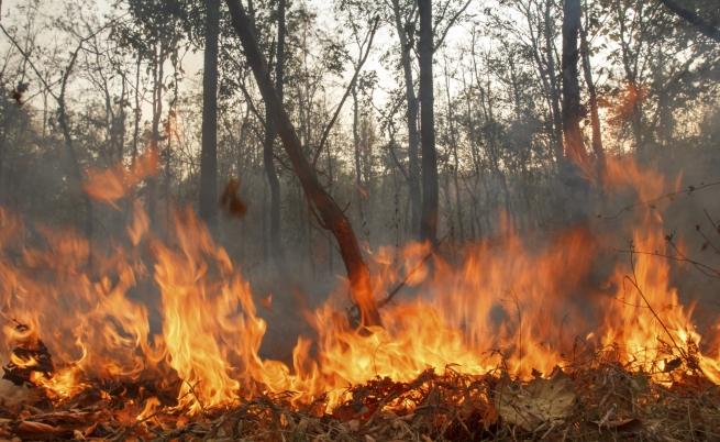 Пожар в Тюленово спрян на метри от селото и цистерни за нефт
