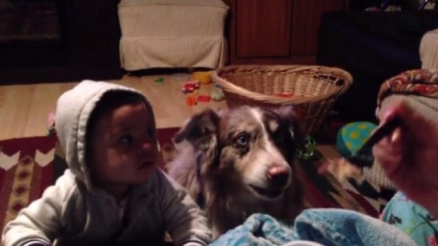 Говорещо куче стана хит в мрежата (видео)