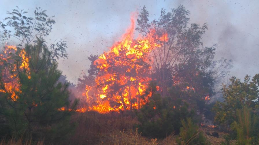 Пожарът край Априлци отново се е активизирал