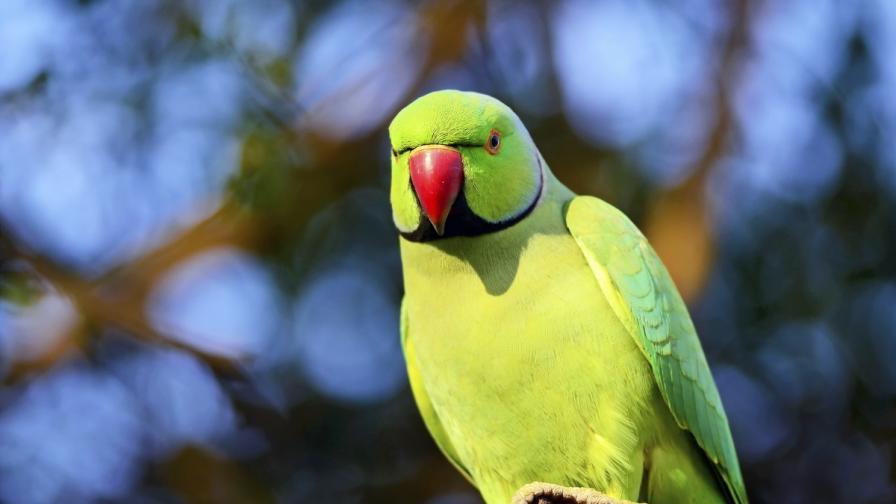 Арестуваха индийски папагал за обида (видео)