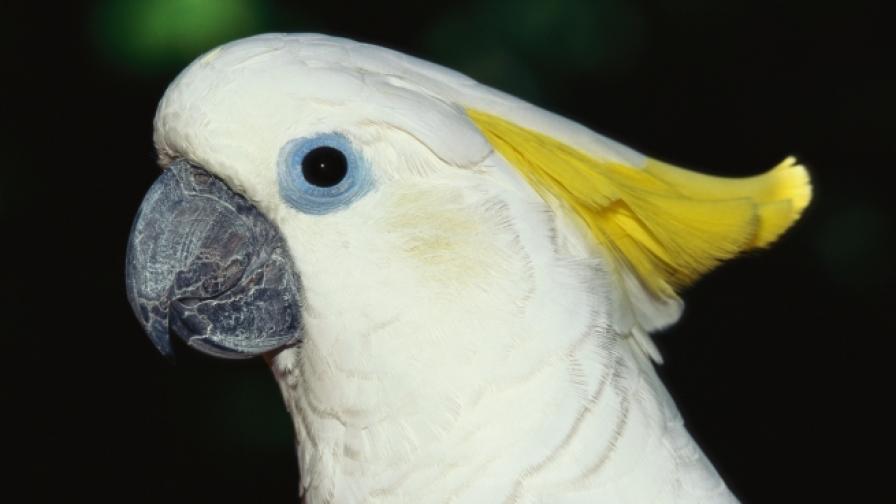 Папагали във вихъра на танца (видео)