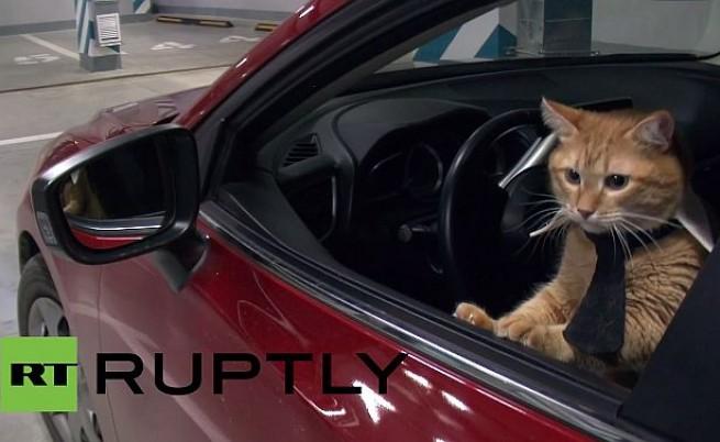 Котки живяха 24 часа като хора - бизнесмени и шефове (видео)