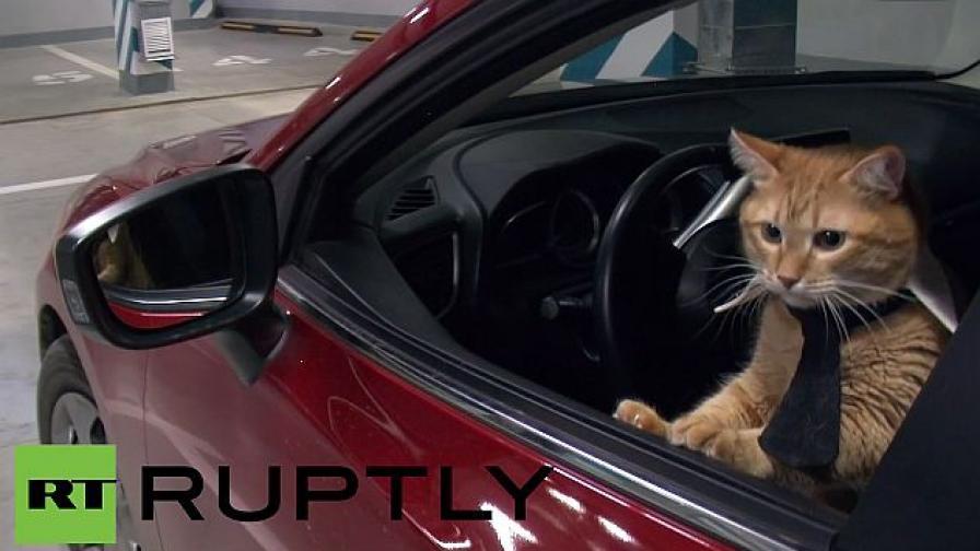 Котки живяха 24 ч. като хора - бизнесмени и шефове (видео)