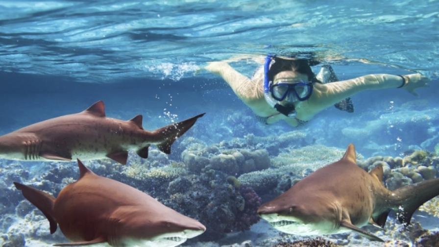 Танцуващата с акули (видео)